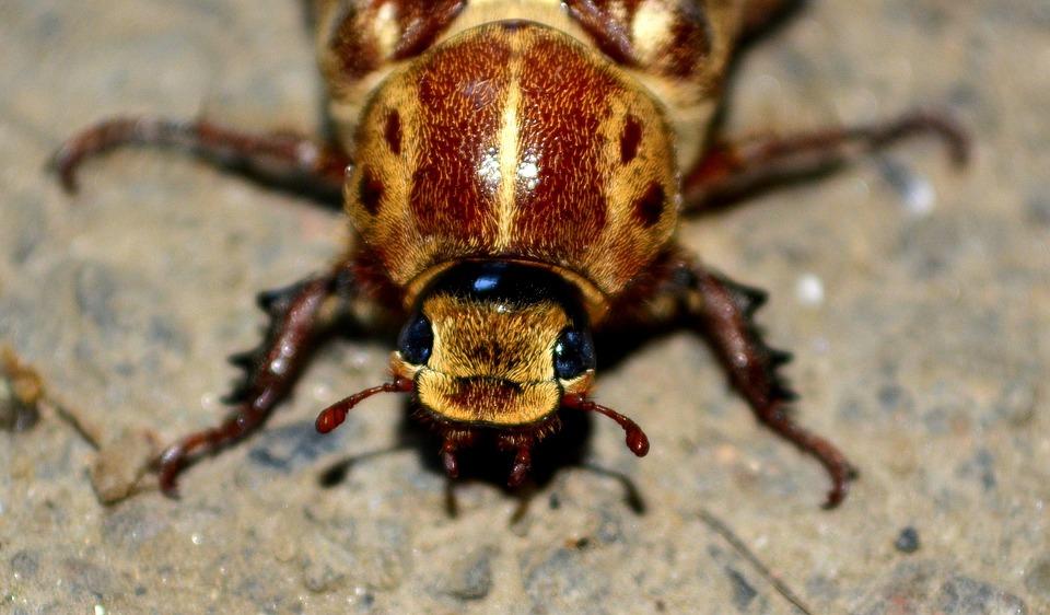 Uwaga na te owady! Mogą przenieść czerwonkę! Zakażenie na drodze fekalno-oralnej
