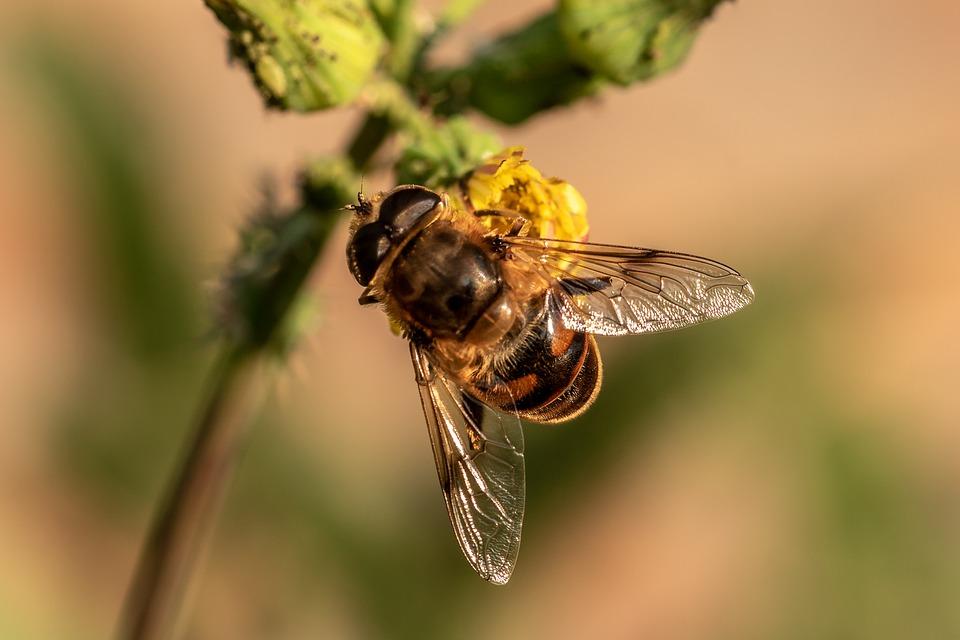 Na przystankach posadzono rośliny dla pszczół. Mają pomóc tym pożytecznycm owadom