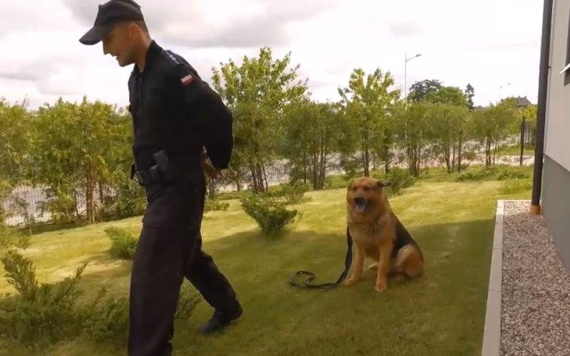Policyjny pies odszedł na emeryturę. Mieszkańcy dużo mu zawdzięczają