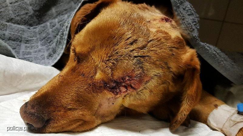 Pies skatowany i żywcem zakopany w lesie! Policja szuka oprawcy