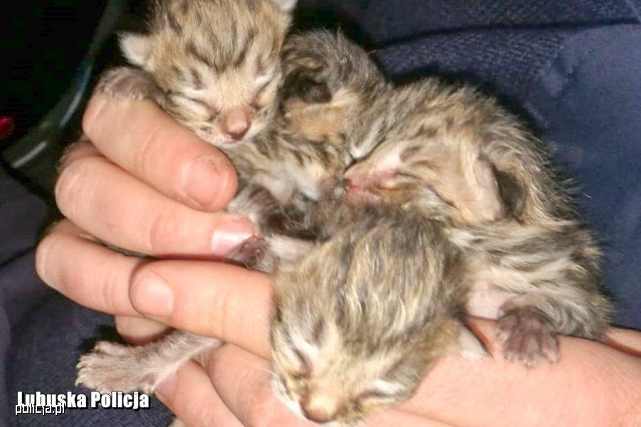 Wyrzuciła małe kotki jak śmieci w foliowej torbie