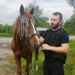 Kasztanka-uciekinierka postanowiła zwiedzić Małopolskę