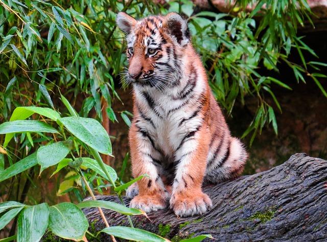 Wreszcie dobre wiadomości ze świata zwierząt. Wzrosła liczba pięknych kotów