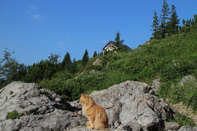 Niezwykły kot-przewodnik uratował życie turyście w górach