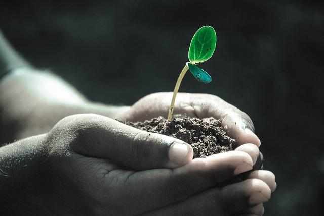 W jeden dzień posadzili 350 mln drzew. Pobili rekord Indii, który wynosił 66 mln