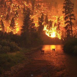 """W światowych mediach cisza o ogromnych pożarach Amazonii """"Największych płuc świata"""" [WIDEO][ZDJĘCIA]"""