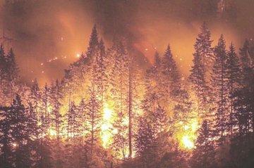 Płonie ponad 4 miliony hektarów lasów na Syberii. To wielkość Holandii!