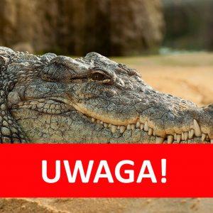 SANEPID ostrzega przed… stekiem z krokodyla!
